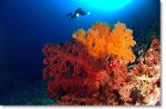 Great Barrier Reef Diving, Australia