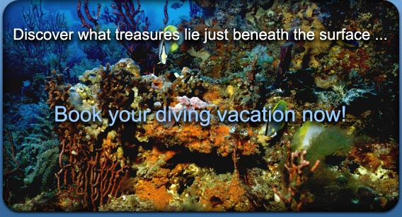 Discover what treasures lie just beneath the surface ... Book your diving vacation now!